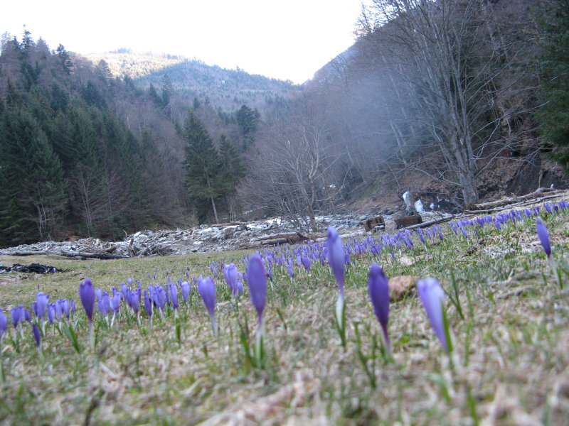 Sambata-Tal, März 2008, Rumänien